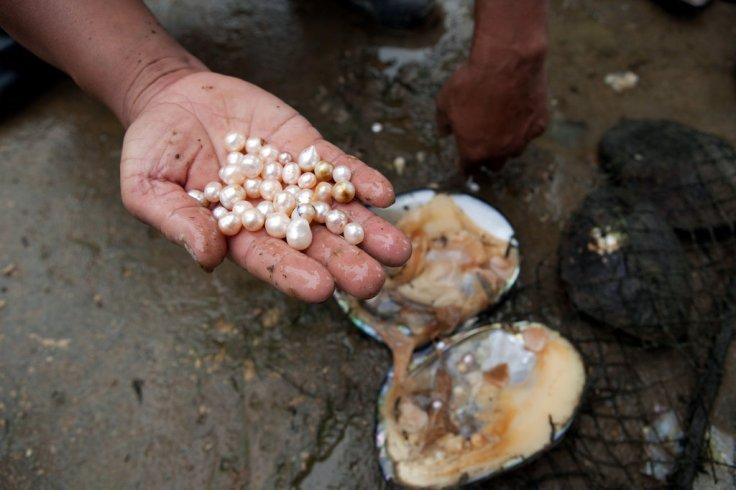 pearl-harvest